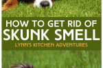 Getting Rid Of Skunk Smell