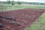 Garden 4-28-09