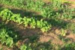 garden 2  5-25-09