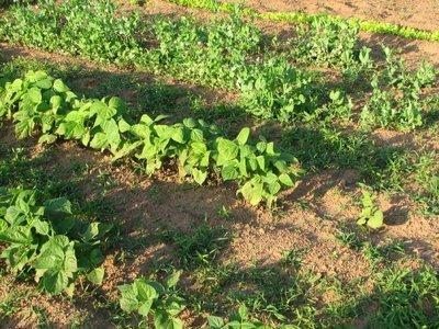My Garden or My Garden Full Of Weeds - Lynn's Kitchen ...