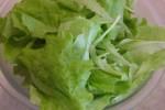 lettuce 5-11-09